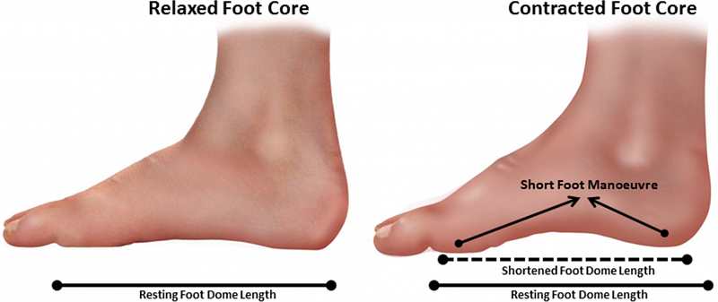 Why You Should Strengthen the Intrinsic Muscles of the Foot    Blog ...