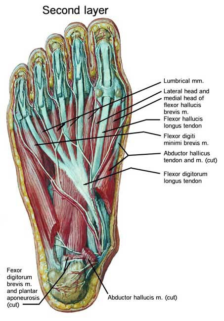 Why You Should Strengthen The Intrinsic Muscles Of The Foot Blog